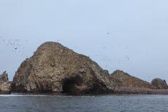 Natur Park Islas Ballestas Peru Royalty Free Stock Image