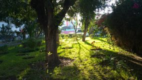 Natur. Plant greenery stock image