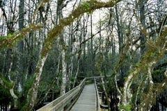 Natur-Promenade Lizenzfreie Stockbilder