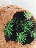 Natur pund i växter Royaltyfri Bild