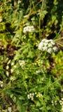 Natur in pyrinees Bergen Lizenzfreie Stockbilder