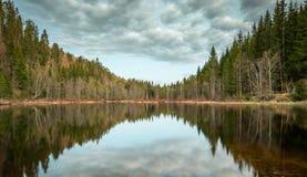 Natur reflektiert im Wasser Stockfoto