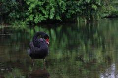 Natur-Reflexion lizenzfreie stockfotografie