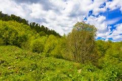 Natur ` s Glück Lizenzfreie Stockfotografie