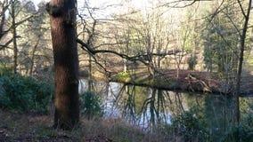 Natur scenery Lizenzfreies Stockfoto