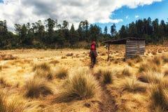Natur Scenics Michoacan Mexiko stockbilder