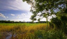 Natur-Schönheit Lizenzfreie Stockbilder