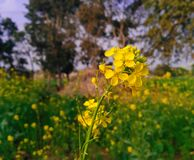 Natur-Schönheit Lizenzfreies Stockfoto