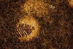 Natur-Schatten Stockfoto
