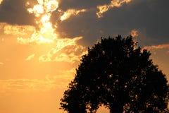 Natur-Schattenbild Stockbild
