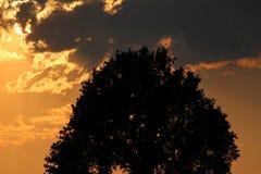 Natur-Schattenbild Stockbilder