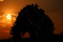 Natur-Schattenbild Lizenzfreies Stockfoto