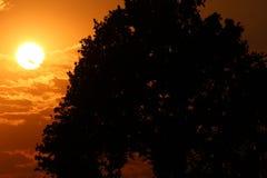 Natur-Schattenbild Lizenzfreies Stockbild