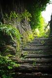 Natur-Schritte Stockbild