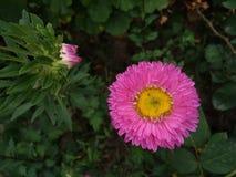 Natur in seiner wirklichen Farbe Lizenzfreie Stockfotos