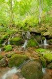 Natur in Serbien Stara Planina Lizenzfreie Stockfotografie