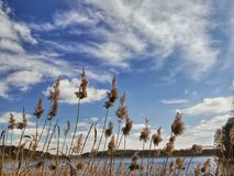 Natur sjö Royaltyfria Foton