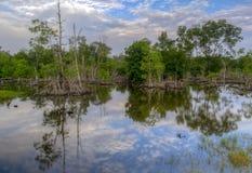 Natur sjö Bagan Datoh Perak Malaysia Arkivbild