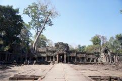 Natur som över tar på den Preah Khan templet royaltyfri bild