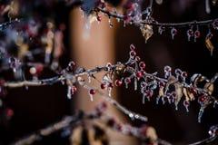 Natur som inneslutas i is efter en storm Royaltyfri Bild