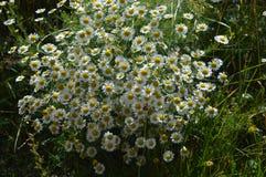 Natur sommar Royaltyfria Bilder