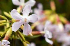 Natur Sommar Fotografering för Bildbyråer