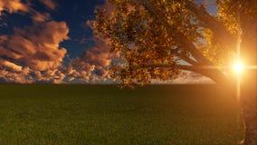 Natur-Sonnenuntergang-Szene mit Baum lizenzfreie abbildung