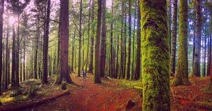 Natur spornt an Lizenzfreies Stockbild