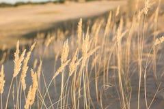 Natur steppe sand Naturvårdsområde royaltyfri bild