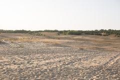Natur steppe sand naturvårdsområdelandskap royaltyfria foton