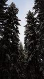Natur sweden de Skog Imagens de Stock Royalty Free