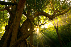 Natur-Tageslicht-Himmelsonneberührung Sam-Leuchte Stockfotografie