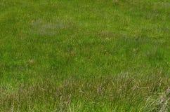 Natur tekstury trawy tła świeżej green zdjęcie stock