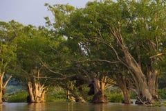 Natur in Thailand Stockbilder
