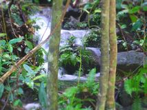 Natur in Thailand Royalty-vrije Stock Afbeelding