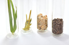 Natur to Biopolymer. Bamboo leave, bamboo fibres, chipped wood and ready  biopolymer in test tubes. Like Stock Photo