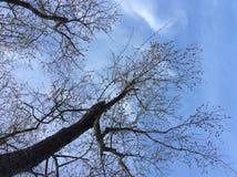 Natur träd, härligt våravbrott Royaltyfri Fotografi