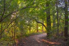 Natur-Traum-Weg im Wald lizenzfreie stockbilder