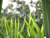 Natur traw tło, trawy różni rozmiary, wielkie trawy w przodzie Małe trawy za spojrzeniami jak nadokienna rama n Fotografia Royalty Free