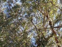 Natur Treetops Lizenzfreies Stockbild