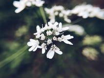Natur um mich Stockfotografie