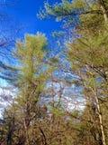 Natur und Bäume Stockbilder