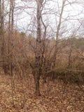 Natur und Bäume Stockbild