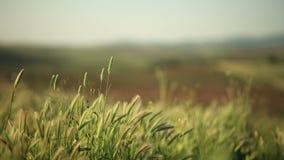 Natur und der Wind stock footage