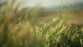 Natur und der Wind stock video