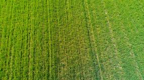 Natur und Landschaft: Vogelperspektive eines Feldes, Bearbeitung, grünes Gras, Landschaft, bewirtschaftend, Stockbild
