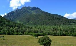 Natur und Schönheit auf den Nordsteigungen des größeren Kaukasus Lizenzfreies Stockbild