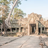 Natur und Tempel in Angkor Lizenzfreie Stockbilder
