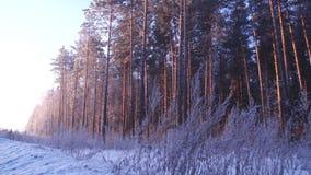 Natur vinter, norr som är lös, en tur arkivfilmer