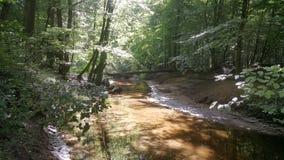 Natur-Wald auf seinem Besten stockfoto